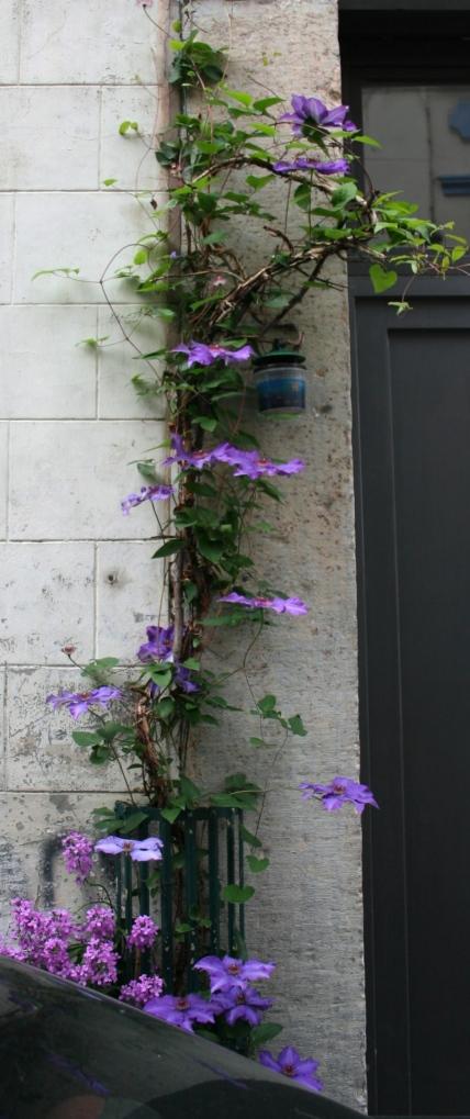 bloemen 1 kleur